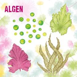 Algen und Meeresgemüse